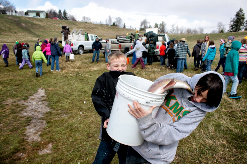 Michael Rutherford, left, and Brady Martinez haul a large rainbow trout from Montana Fish, Wildlife and Park trucks to the Dry Bridge Pond in Kalispell. - Justin Franz/Flathead Beacon