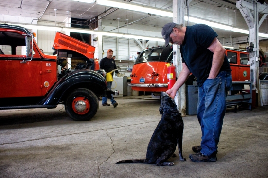 Steve Taylor, head mechanic at the East Glacier shop, takes a moment to great the shop dog, 11-year-old Mabel. In the background, two of the 33 operational Red Buses sits awaiting repairs. - Justin Franz/Flathead Beacon